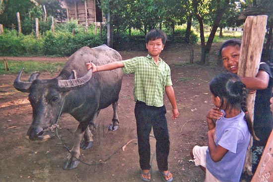 Boy Tending Water Buffalo